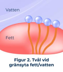 figur2 tvål vid gränsyta fett/vatten